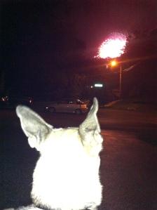 Rodney watching the fireworks.
