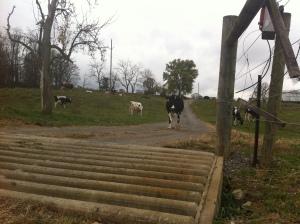 cattleguard2