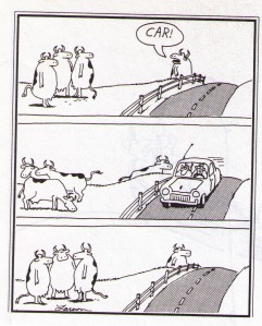 far side cows