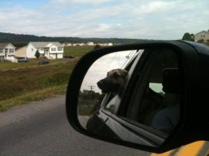rodney in car