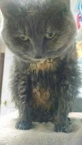 cat dignity