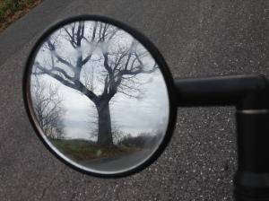 lonely tree2