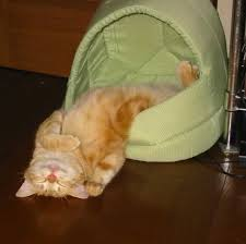 cat falling out of bed