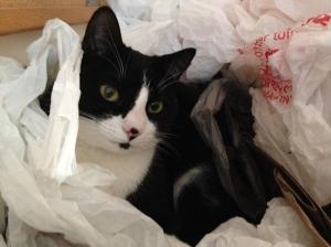 Artemis in bags